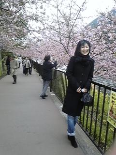 お知らせ 桜_f0017897_16201385.jpg