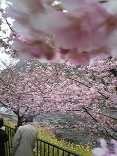 お知らせ 桜_f0017897_16202644.jpg