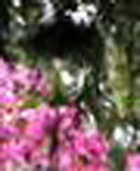 e0103408_18481230.jpg