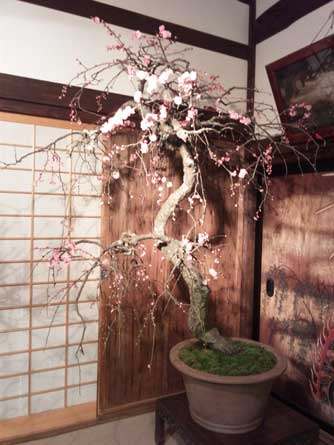 盆梅展と水墨画_d0157021_1859514.jpg