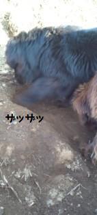 f0077931_1981471.jpg