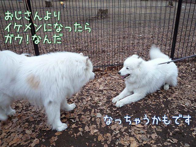 土曜日のおっきな公園_c0062832_16404398.jpg