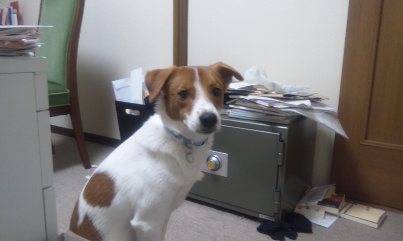 招き犬 ニコ_b0019333_11555223.jpg