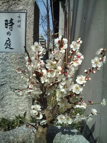 ポカポカな京都_c0113733_0471097.jpg