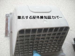f0031037_2031316.jpg