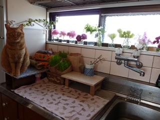キッチン小窓猫 しぇる編。_a0143140_2345412.jpg