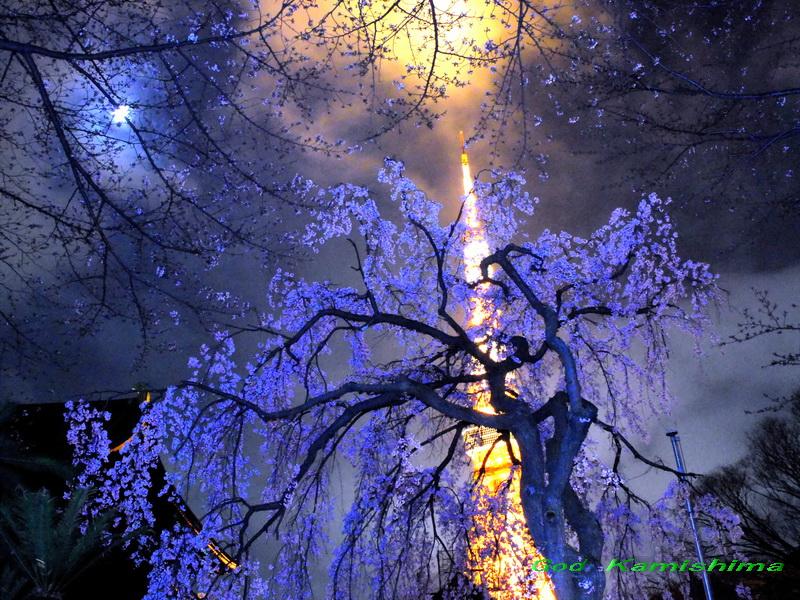 桜の話が_f0079943_14464430.jpg