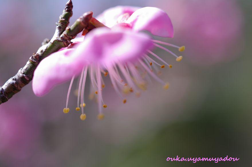 宝塚・中山寺の春_a0157263_22311537.jpg