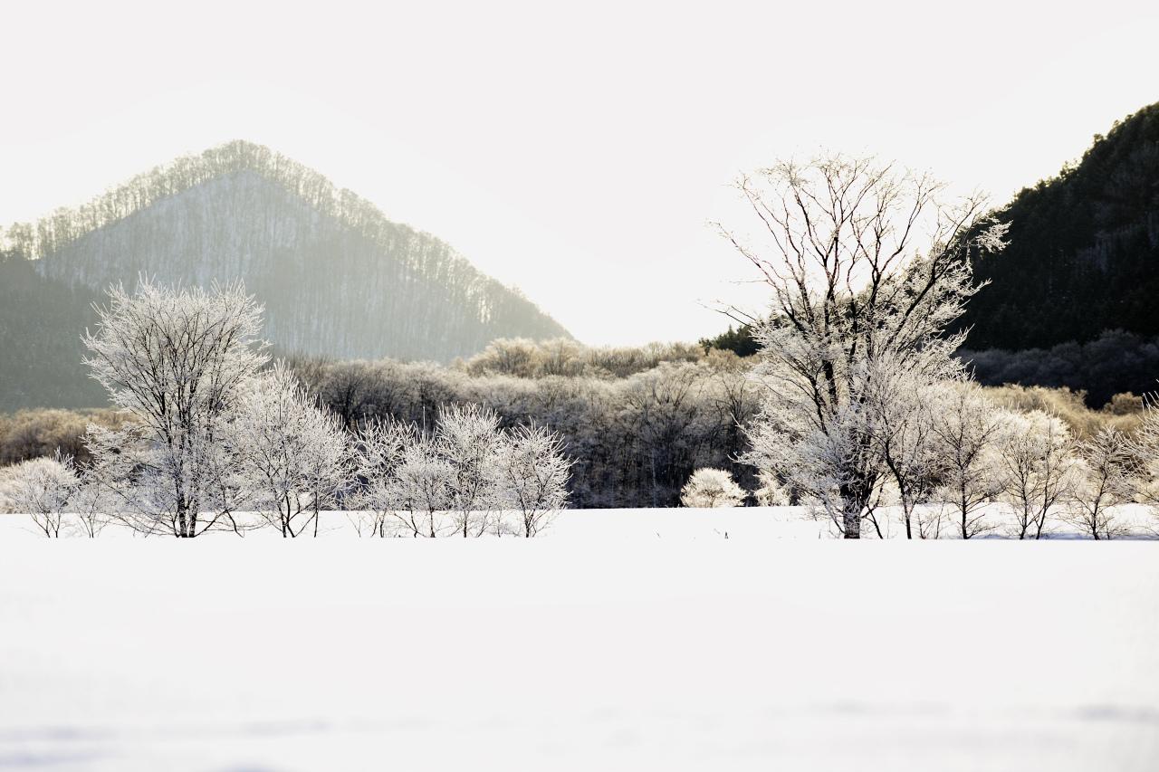 樹氷遠望_e0171886_2126332.jpg