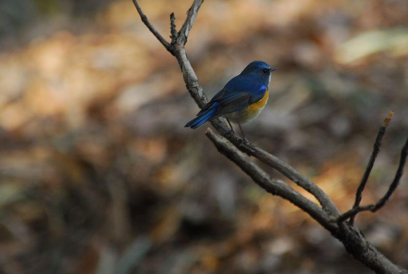 青い鳥_b0021897_1261460.jpg