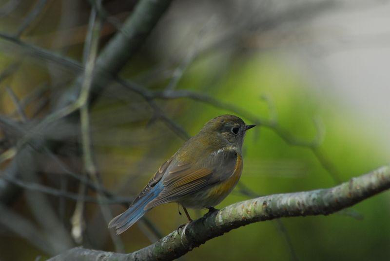 青い鳥_b0021897_126319.jpg