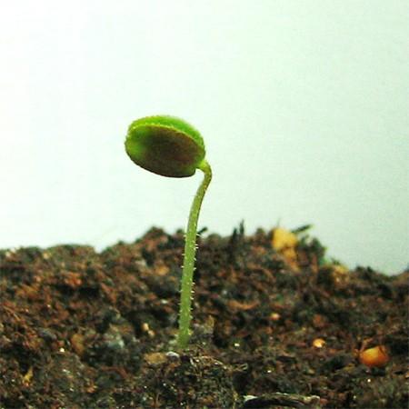 春〜私という個が芽を出し始める - 個を尊重するe-Learning_e0115301_1625752.jpg