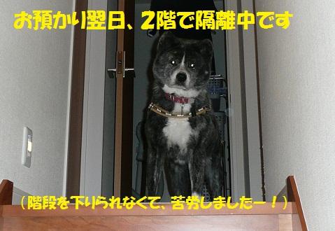 f0121712_6173721.jpg