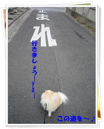 b0167519_910626.jpg