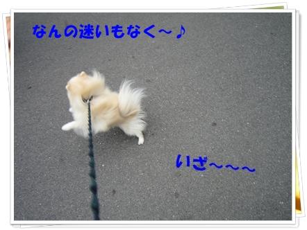 b0167519_984026.jpg