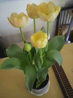 咲きました_e0124021_9164340.jpg