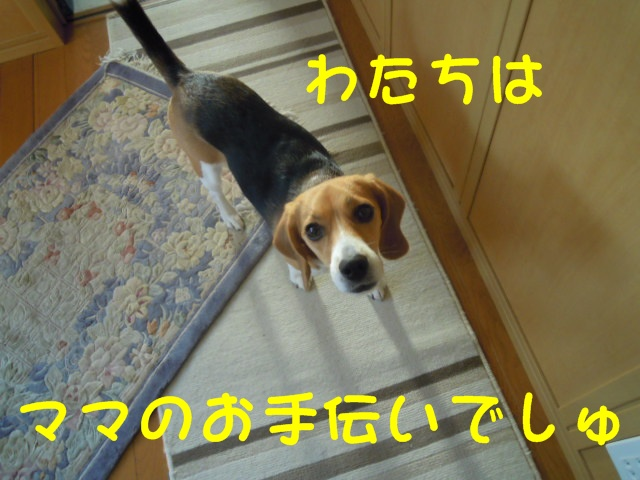 c0166622_9295038.jpg