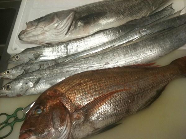 淡路島直送の魚 ⑤_e0210422_0363241.jpg