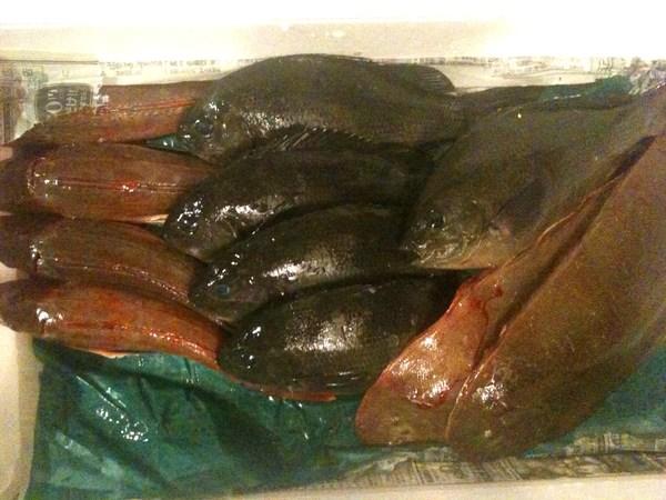 淡路島直送の魚 ⑤_e0210422_0373119.jpg