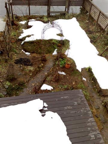 雪の下からふきのとう_b0132338_11503991.jpg