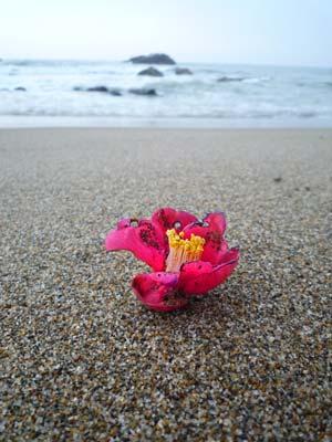 春の海!_c0019338_22501874.jpg