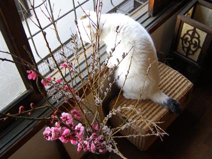 FRI  25  FEBRUARY  2011_a0099744_1331543.jpg