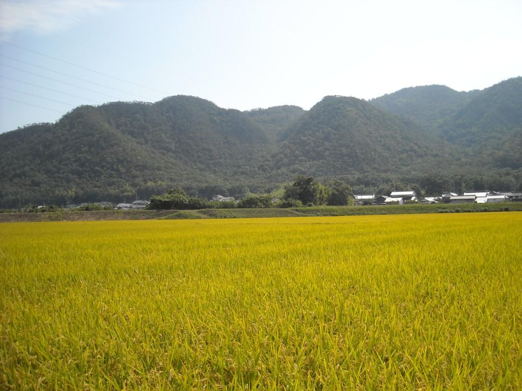 笠岡のおいしいお米の産地_f0184247_2144278.jpg