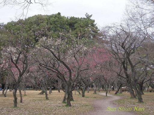京都御苑の梅_a0164068_1583589.jpg