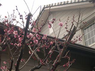春ですネ_d0155273_13175713.jpg