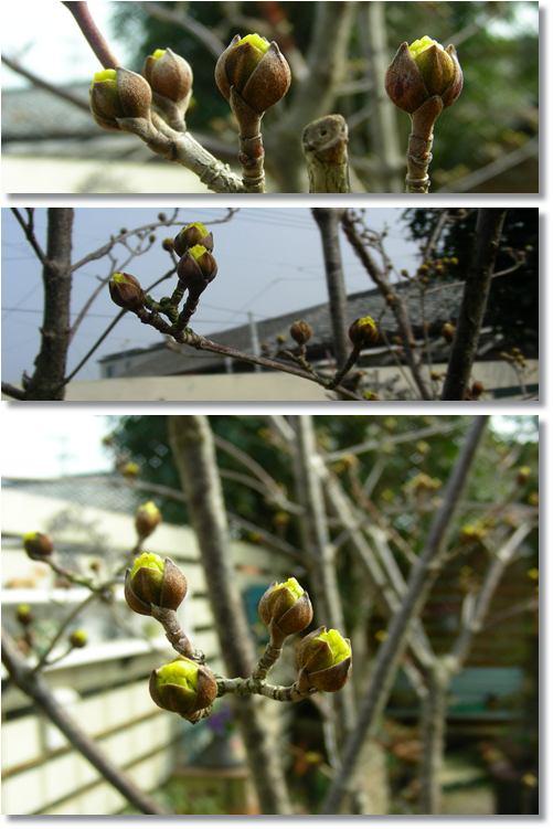 春の訪れ~♪_b0096584_22353423.jpg