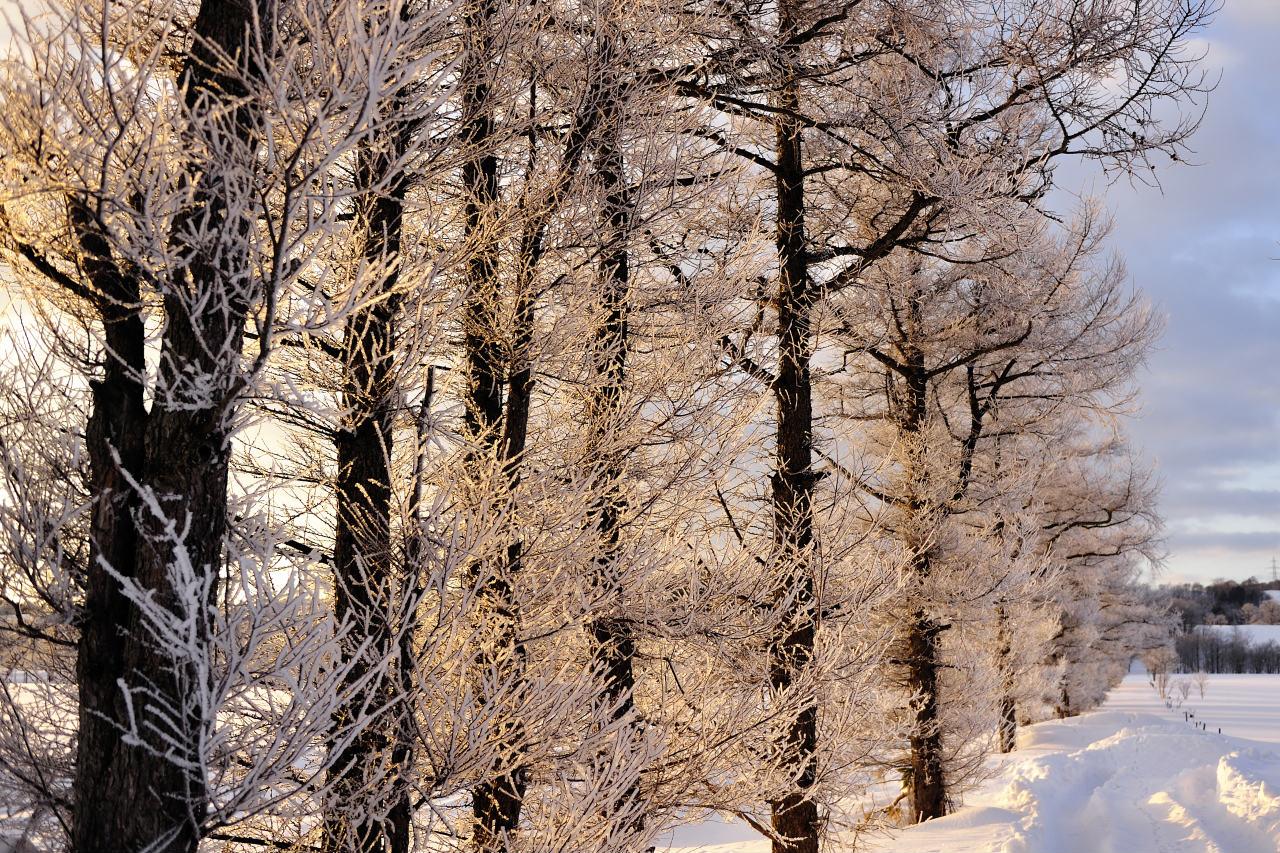 凍った桜花_e0171886_2014454.jpg