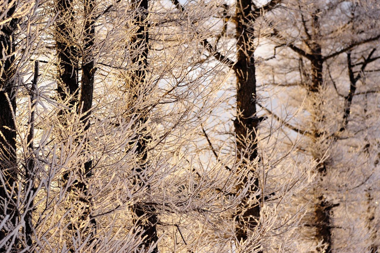 凍った桜花_e0171886_206223.jpg
