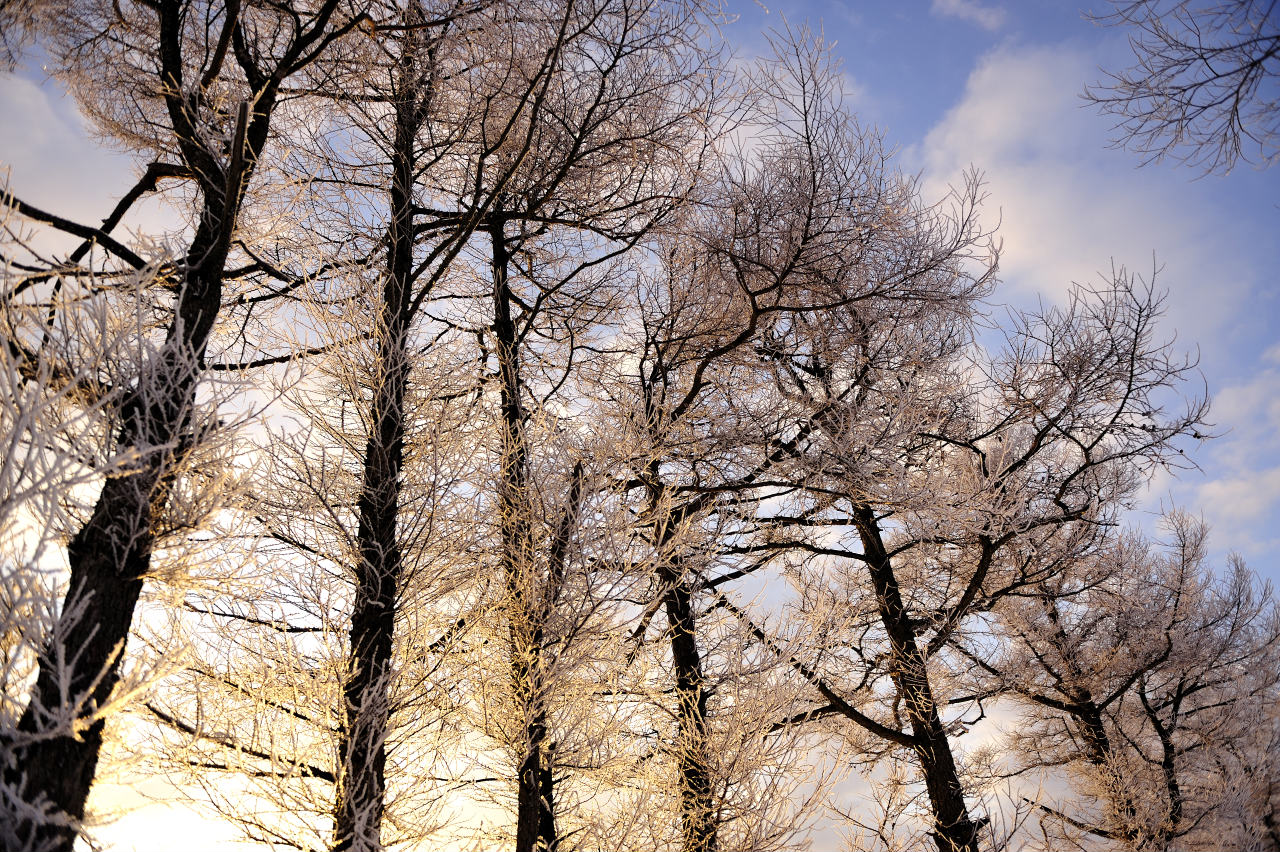 凍った桜花_e0171886_2062798.jpg