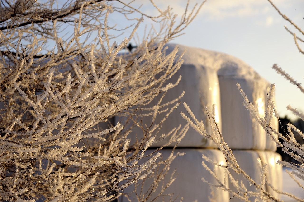 凍った桜花_e0171886_2064424.jpg