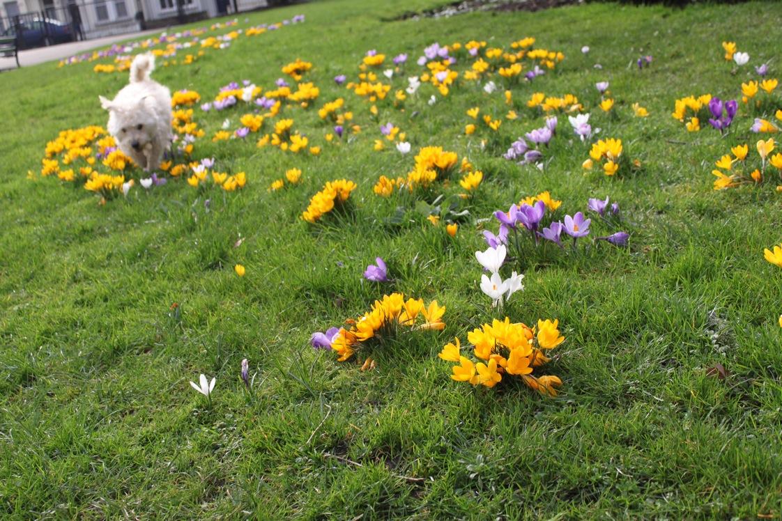 春が来た〜_a0137487_01033100.jpg