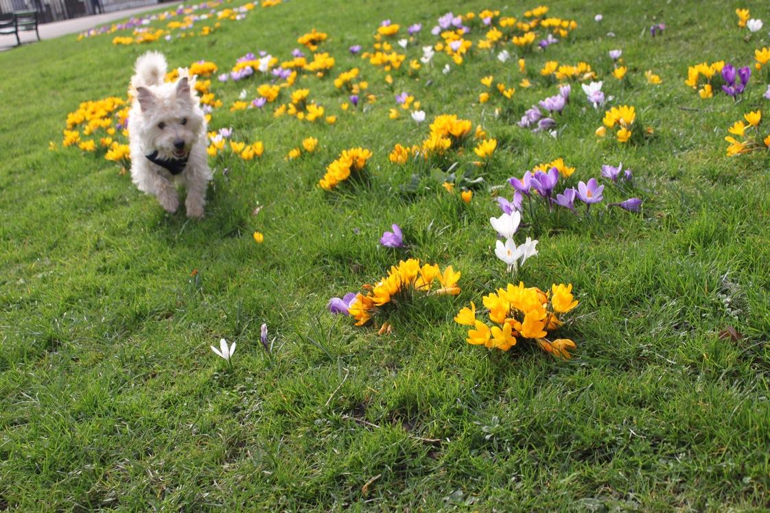 春が来た〜_a0137487_0114058.jpg