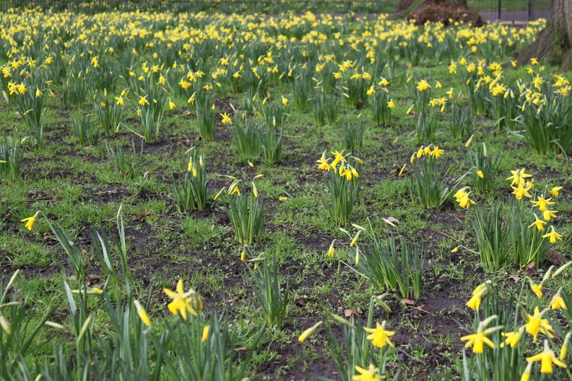 春が来た〜_a0137487_034152.jpg
