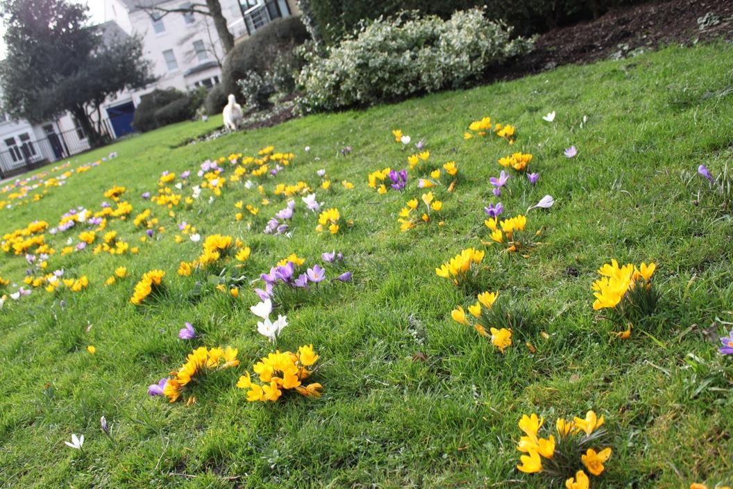 春が来た〜_a0137487_074561.jpg