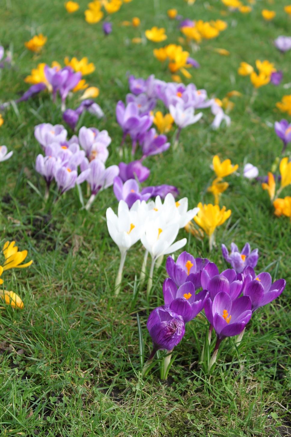 春が来た〜_a0137487_083512.jpg