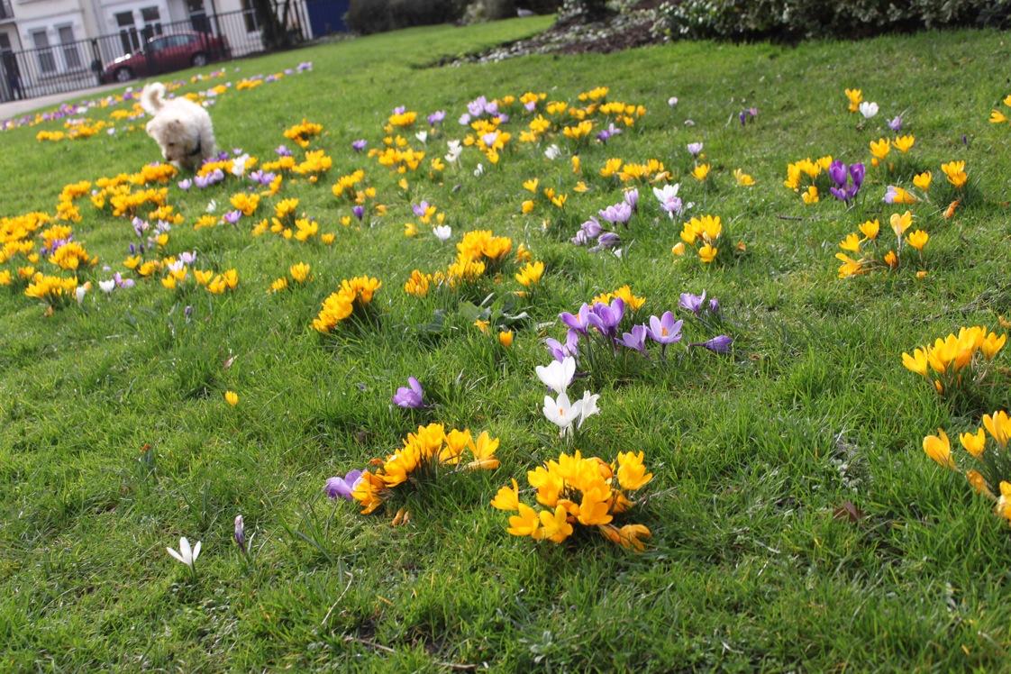 春が来た〜_a0137487_094028.jpg