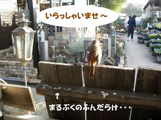 c0190010_20294881.jpg
