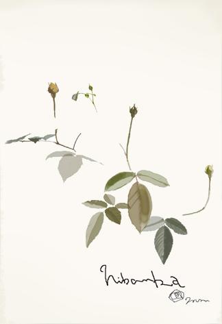 バラのあたらしい葉っぱ_f0172313_1282176.jpg