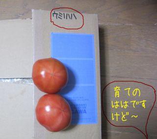 b0008217_10251950.jpg