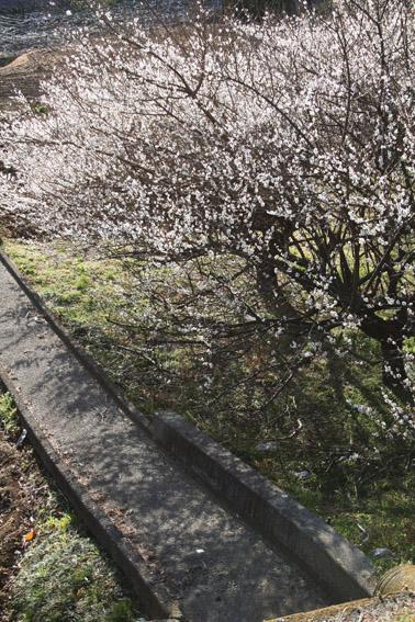 春一番_c0107829_1932419.jpg