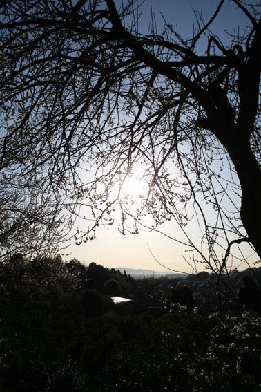 春一番_c0107829_1935353.jpg