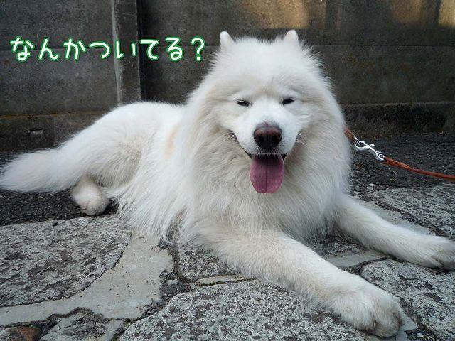 きのうの帰り道_c0062832_1535496.jpg