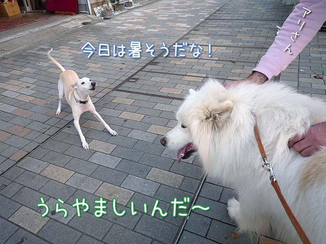 きのうの帰り道_c0062832_16585727.jpg