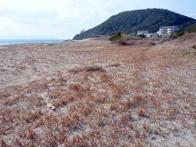枯れ野の伊良湖岬_c0019338_0173100.jpg