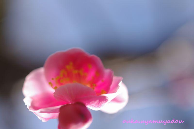 宝塚・梅の中山寺_a0157263_22153552.jpg