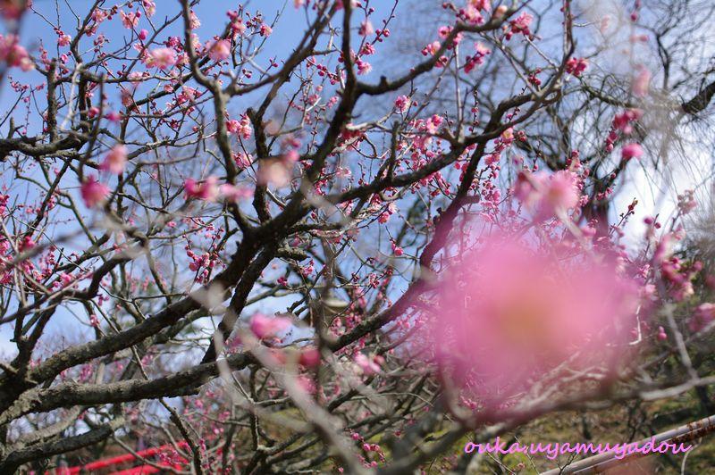 宝塚・梅の中山寺_a0157263_22215872.jpg